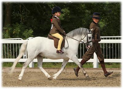Pearson blackjack pony